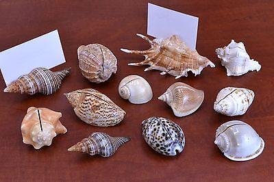 12 PCS NATURAL SEA SHELL BEACH CARD HOLDER PLACE WEDDING DECOR #7655