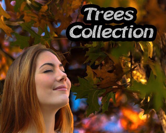 Digital Photo Portrait Backgrounds Trees Nature Templates Backdrop Green Screen