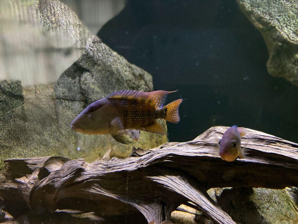 Akvarium, 720 liter