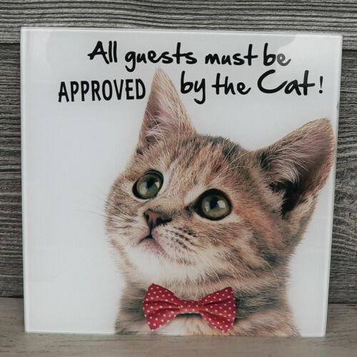 Glasbild Katze mit Fliege Wandbild 20x20 quadratisch Glas Wanddeko weiß Cat
