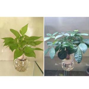 1pc-Soilless-culture-vegetable-hydroponic-plant-flower-root-fixing-sponge-ZP