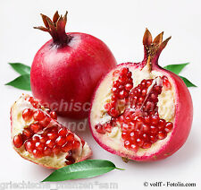 Punica granatum ** Pomegranate ** mediterránea ** kübelpfanze 8 frescura semillas balcón