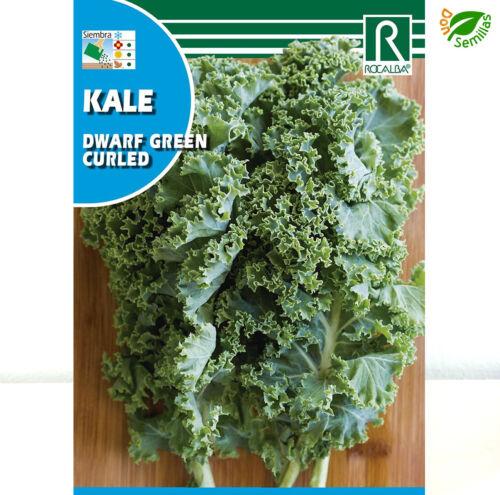 seeds 6 gr // 1.500 semillas Kale Dwarf Green Curled Berza Col Rizada