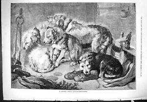 Original-Old-Antique-Print-Fireside-Party-Dogs-Pets-Animals-1876-Edwin-Landseer