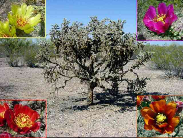 Cymbidium Orchid Plant Single Bulb Drought Tolerant For Sale