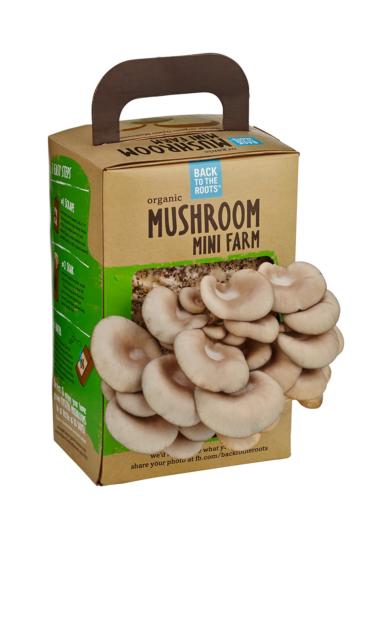 Back To The Roots Organic Mini Mushroom Growing Kit, Harvest Gourmet Oyster  Mush