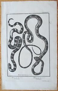 Scheuchzer-Physica-Sacra-Snake-IX-Folio-Decorative-Border-1731