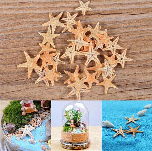 20 pcs Mini Cute Small Starfish Sea Star Shell Beach Home Decor DIY Craft