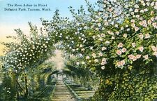 Tacoma,WA. The Rose Arbor in Point Defiance Park 1911