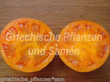 Hurma Ukrainian Tomate *** Tomaten orange *** 10 Samen