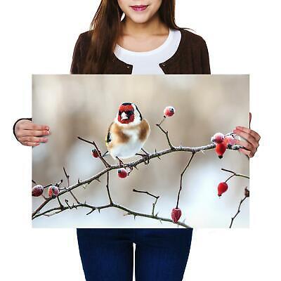 A2Goldfinch Rose Hip Branch Bird Size A2 Poster Print Photo Art Gift #3317