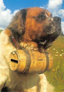 Details About Bt9236 Le Bon Chien St Bernard Frabce Dog Chien Animal Animaux