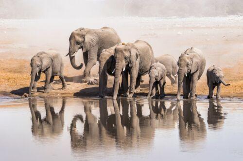 3D Elephant Family 1036 WallPaper Murals Wall Print Decal Wall Deco AJ WALLPAPER