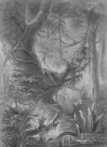 BRAZIL-Scenery-in-Primeval-Forest-Jungle-1880s-G-Roux-Antique-Print-Engraving