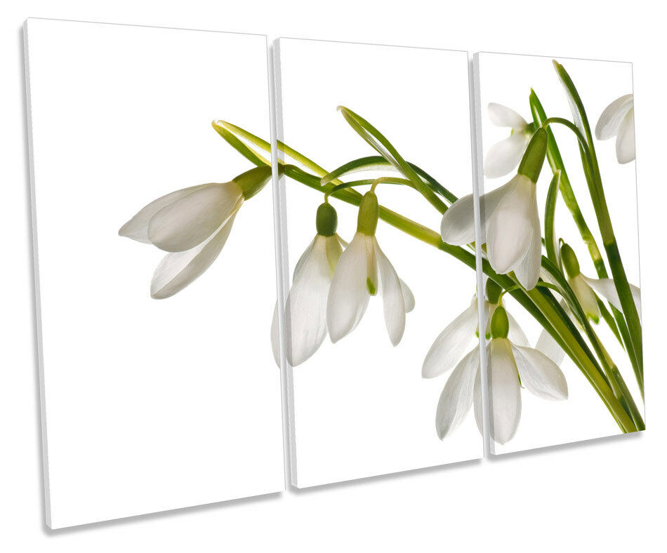 Bucaneve Floreale Fiori TREBLE TELA Wall Art Box incorniciato stampa