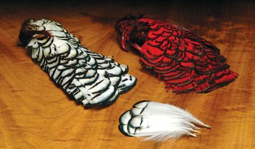 Hareline Dubbin Lady Amherst Head /& Tippet Feathers