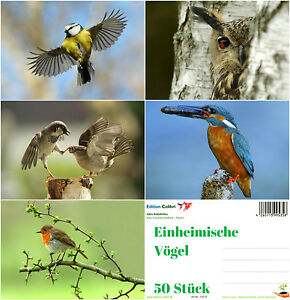 034-EINHEIMISCHE-VOGEL-034-Postkarten-Set-5-Motive-je-10-St-ideal-fuer-Postcrossing