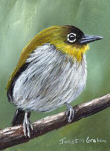 Black-Fronted-White-Eye-ACEO-Bird-Wildlife-Original-ACEO-Acrylic-Painting-Art