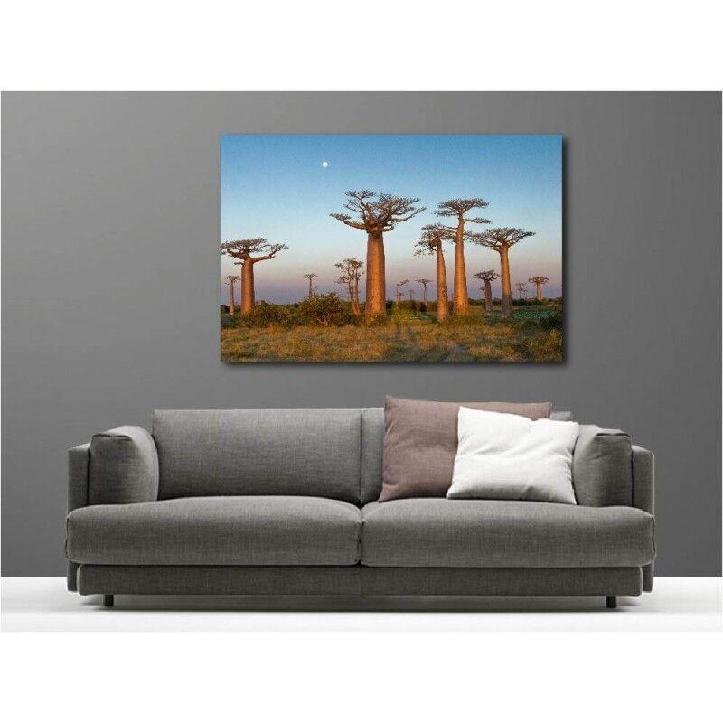 Quadro tessuto decocrazione rettangolare rettangolare rettangolare baobab 58778302 13c8bf