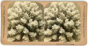 Stereo-The-Great-Western-View-Co-R-Y-Young-Coral-Vintage-stereo-card