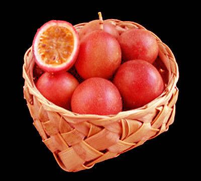 Pink Cheek Passionfruit (Passiflora) - Seeds