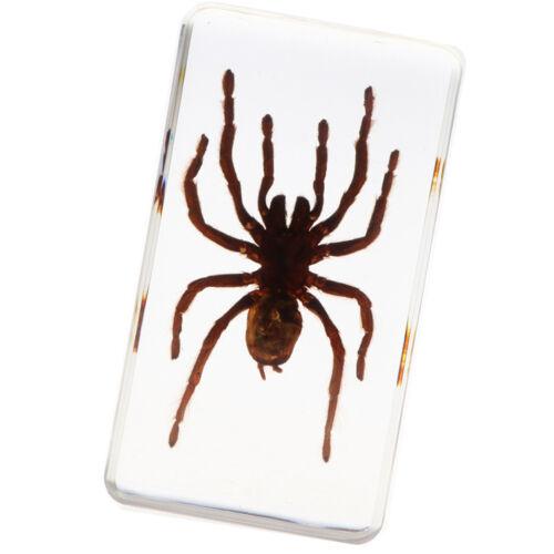Black Spider Spécimen d/'insecte créatif Paperweight Collection Gift