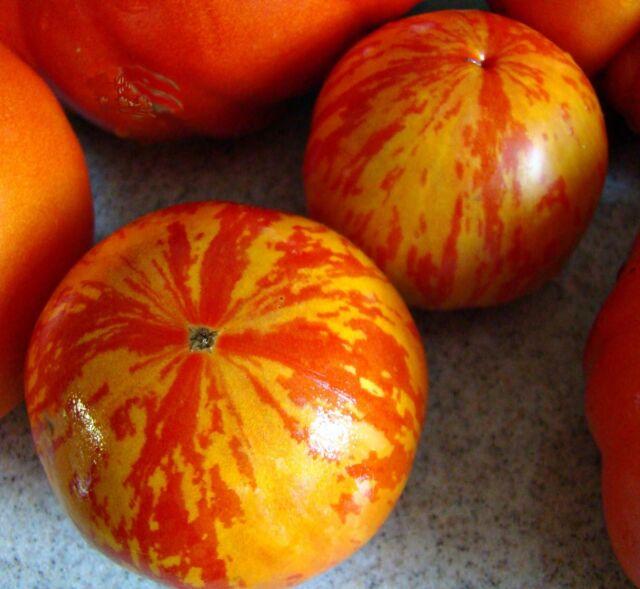 VEGETABLE TOMATO RED ZEBRA (IMPROVED) 60 FINEST SEEDS