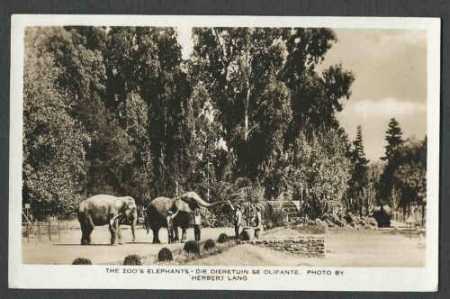 Ca 1915 RPPC PRETORIA THE ZOOS ELEPHANTS
