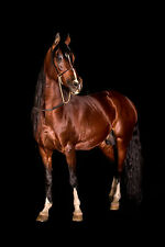 STUNNING HORSE PORTRAIT EQUESTRIAN #41 CANVAS PICTURE WALL ART A1