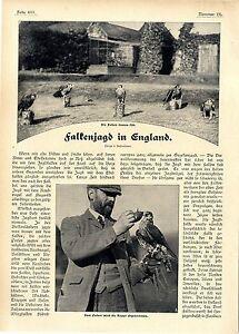 R-Cronheim-Falken-Jagd-in-England-Dem-Falken-wird-die-Kappe-abgenommen-1906