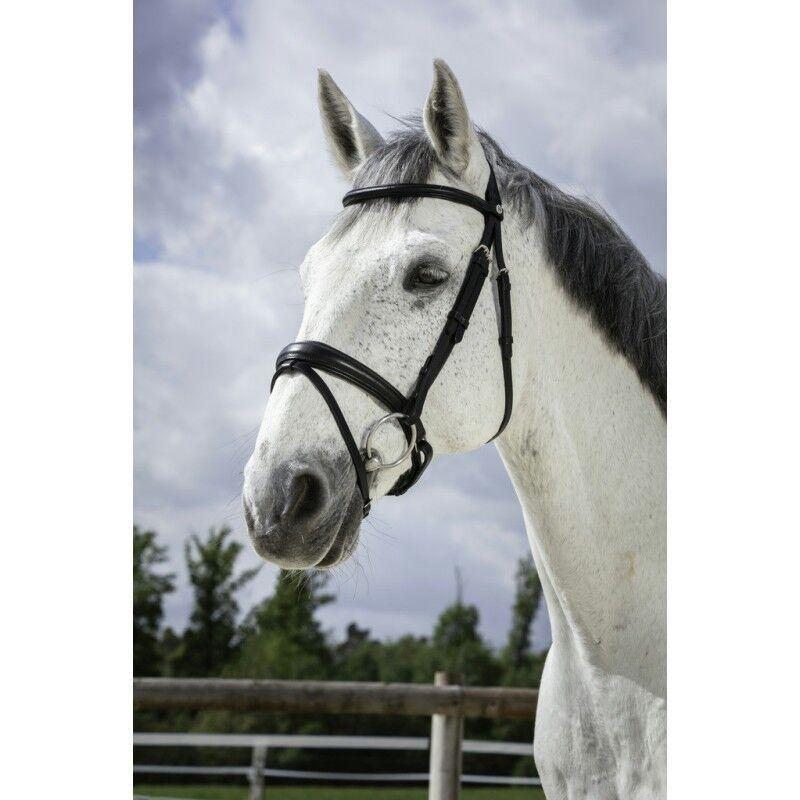 Trensenzaum NORTON PRO Soft Trense schwedisches Reithalfter Ledertrense Pferd