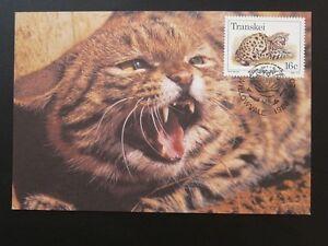 wild cat maximum card Transkei 73034