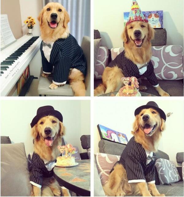New Cute Pet Dog Clothing Gentleman Tuxedo Bow Tie Wedding Suit Coat Costumes