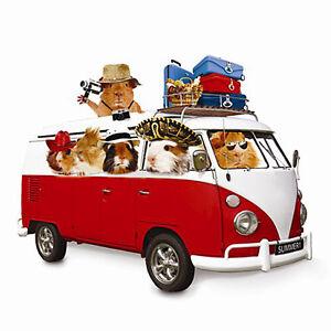 guinea pig vw camper van blank greeting card summer. Black Bedroom Furniture Sets. Home Design Ideas
