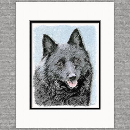 Schipperke Dog Original Art Print 8x10 Matted to 11x14