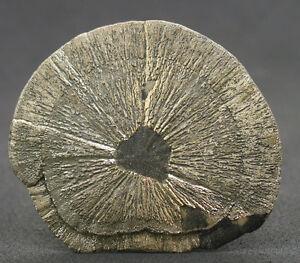 5667-Pyritsonne-pyrite-sun-Sparta-Illinois-Fund-2009-USA