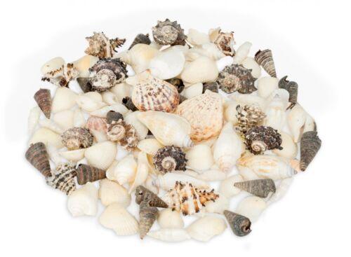 Nadeco ® muschelmix Noir Blanc 1 kgblancs et noirs dekomuschelncoquillages