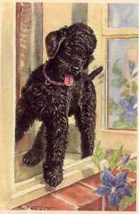 Poodle - MATTED Dog Art Print - German / NEW U