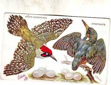 M Bowley postcard - Green Woodpecker & Kingfisher & their Eggs