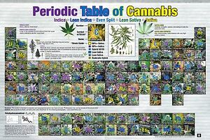 Periodic Table Of Cannabis Poster 24x36 Weed Pot