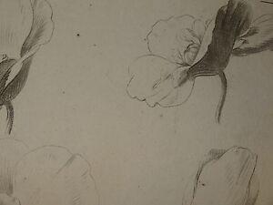Gravure-XVIII-ETUDE-DESSIN-FLEURS-BOTANIQUE-1770-STATUE-HUET-DEMARTEAU-PLANTE