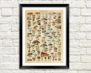 Traditional Fungi Types Illustration MUSHROOMS PRINT
