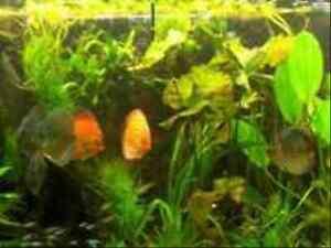 Pflanzen Set FÜr 600-800 L Aquarium, Wasserpflanzen, Kv | Ebay Wasserpflanzen Fur Aquarium Auswahlen Pflege