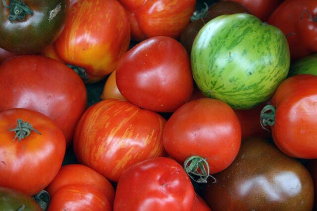 TOMATO Heirloom Mix 100+ seeds MIXED VARIETIES heritage vegetable garden NON GMO
