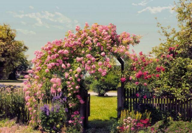 Rose Garden - WALLPAPER MURAL (936)