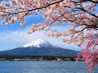 Japanese Authentic Market