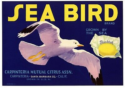 SEA BIRD Vintage Carpinteria Lemon Crate Label, Seagull Bird , AN ORIGINAL LABEL