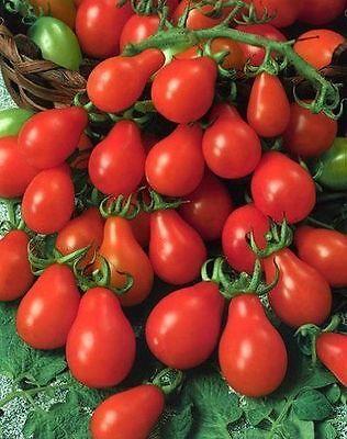 Heirloom Homestead Non-Gmo Tomatoes Tomato Seeds Prolific /& Dependable 50ct