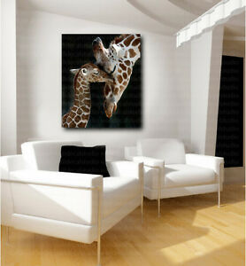 baby giraffe art canvas poster fine print home wall decor