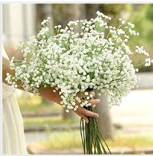 200 SEMI DI NOZZE fiori gypsophila in tutto il cielo STAR CHARDONNAY ERBA
